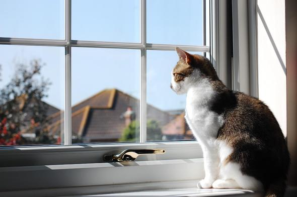 [PIC] Darcy the Cat on the lookout