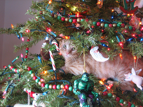 4118967_141852173293_cat-in-a-christmas-tree.jpg