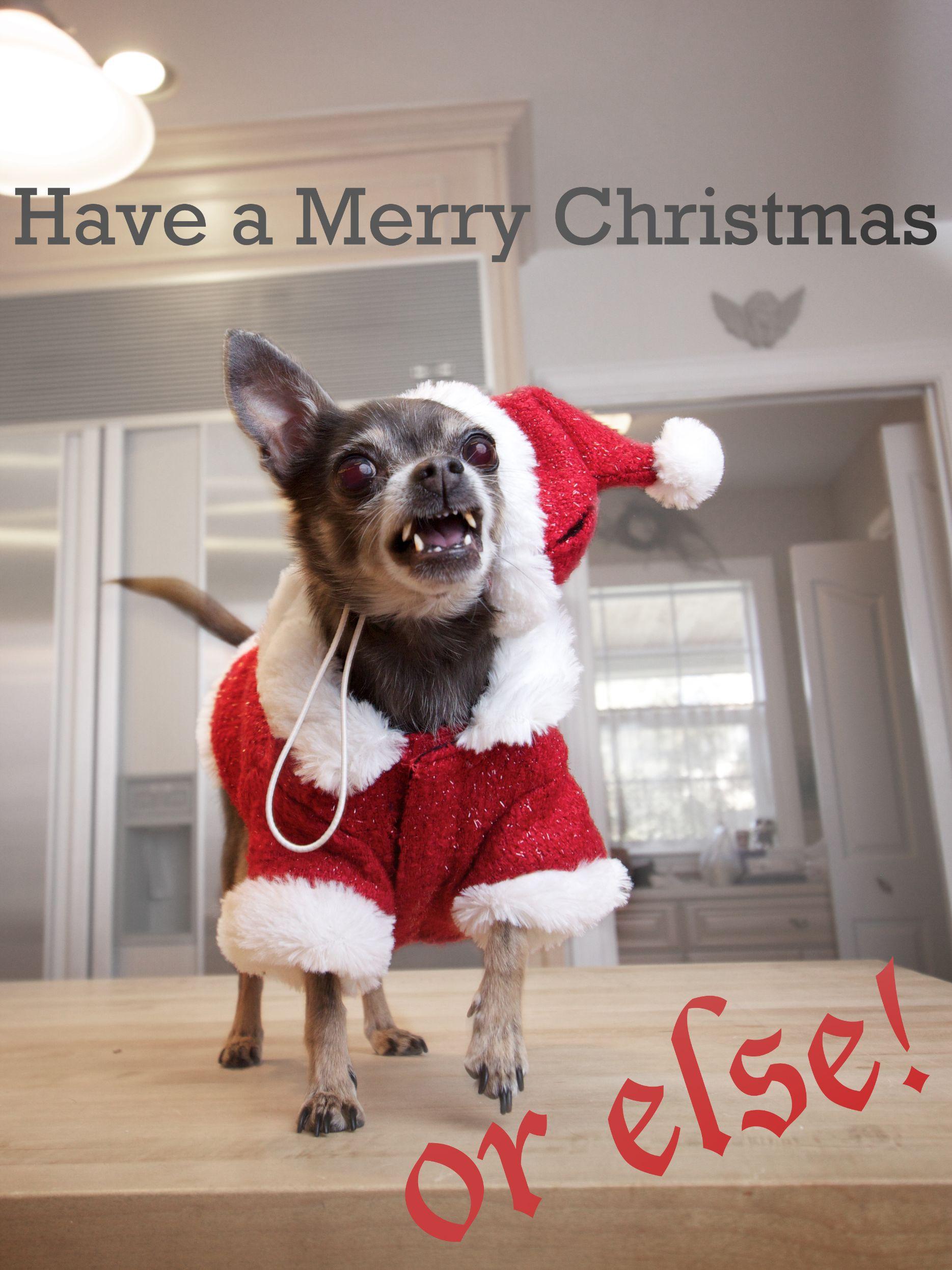393421_141953138142_satanic-merry-christmas-dog.jpg