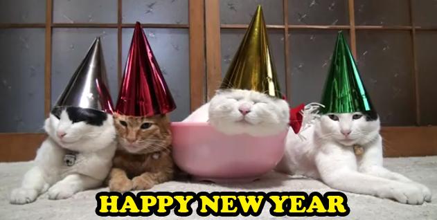 4118967_142017698593_HAPPY-NEW-YEAR-CATS-in-cute-kitty-hats.jpg