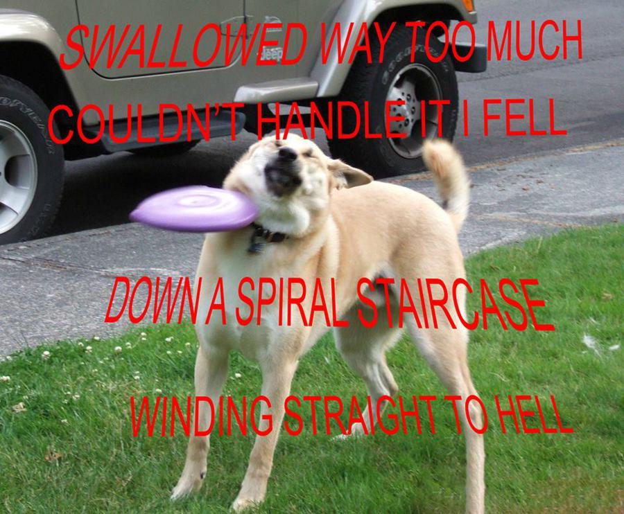 Death grips lyrics on dog lic