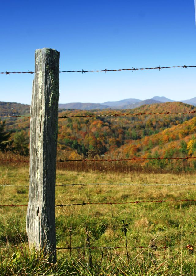 4589947_143508978023_Wooden-fence-post.jpg