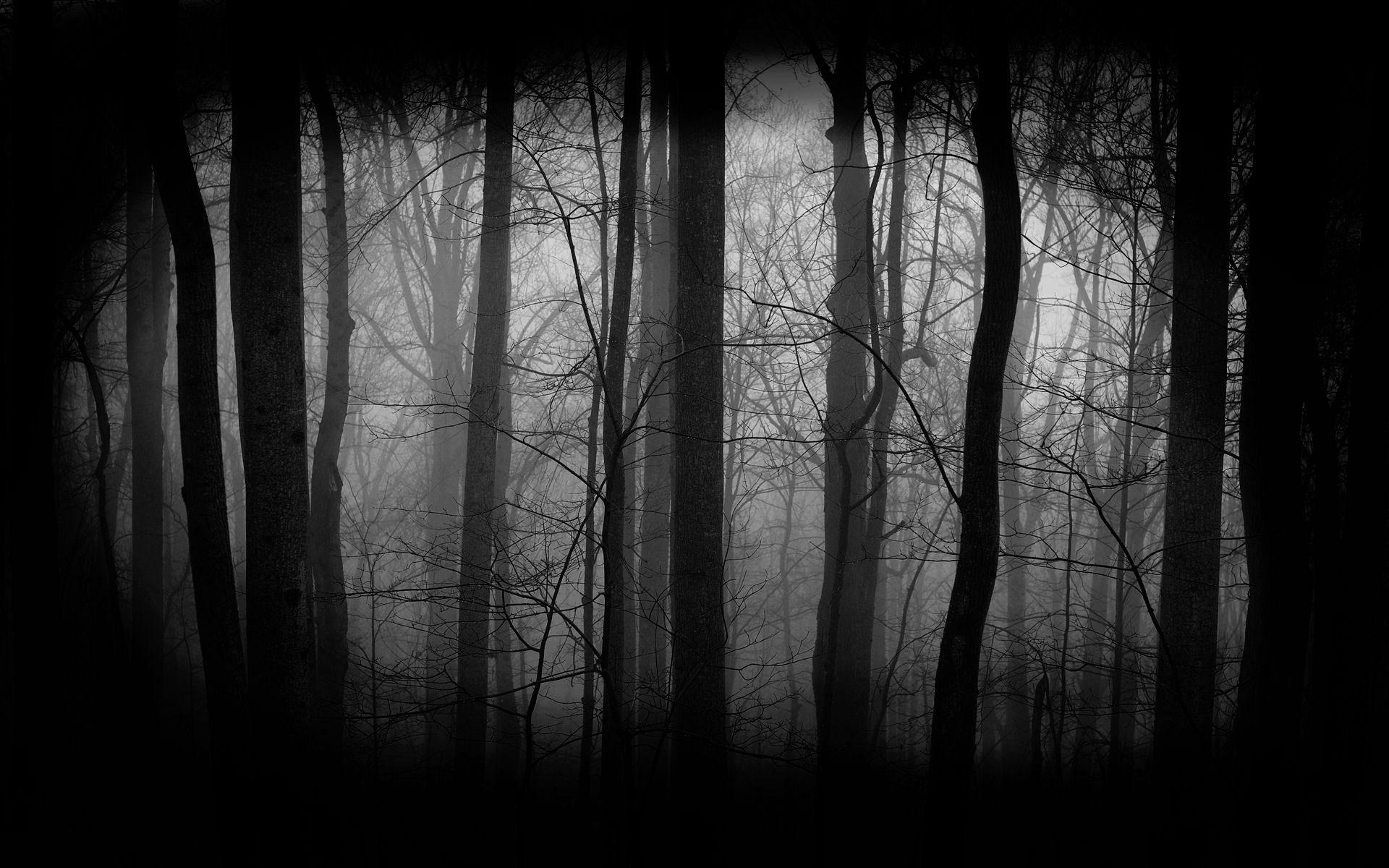 5435251_144067962011_Dark-Forest-Wallpaper-3.jpg