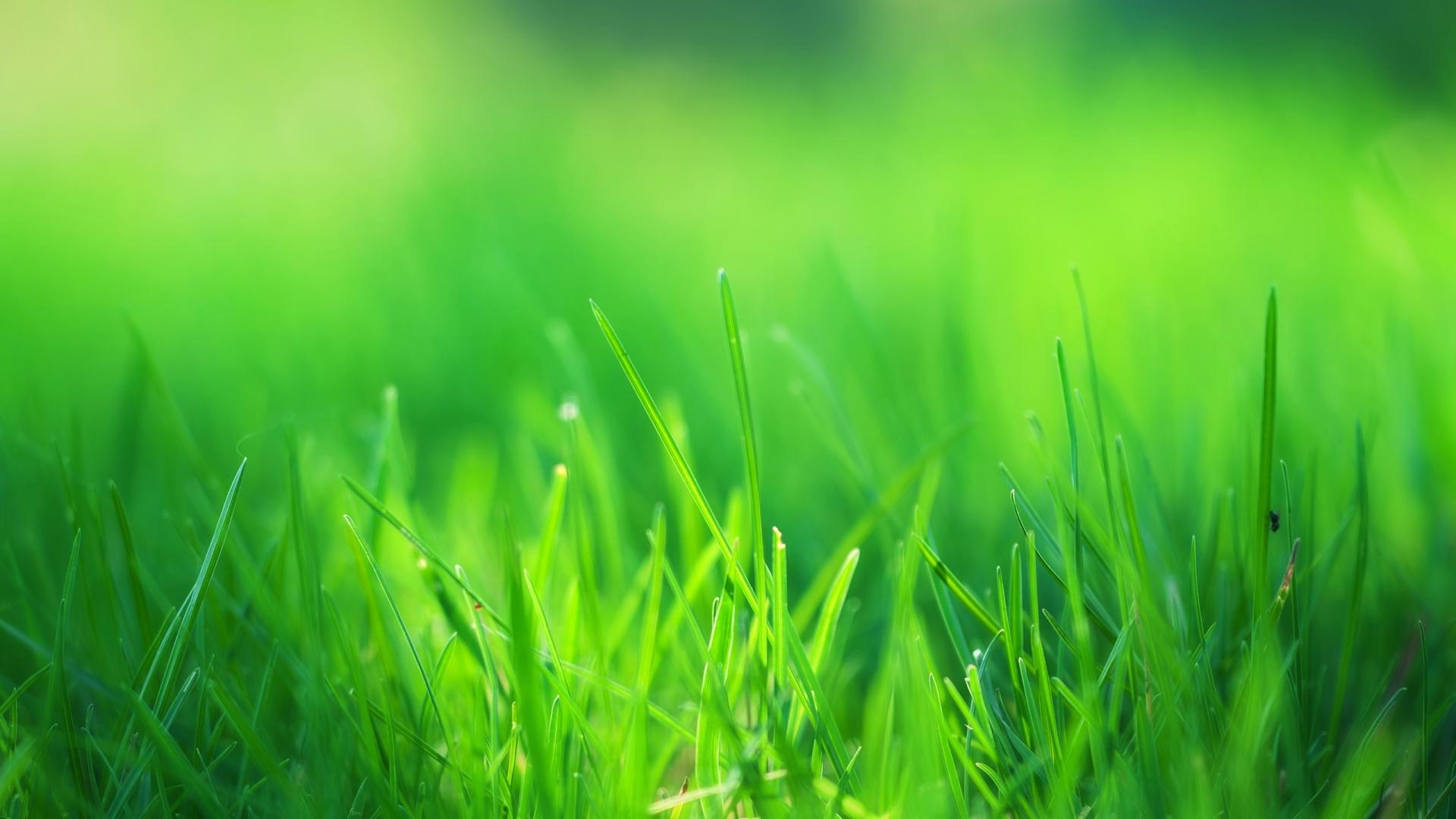 5735725_148841397983__downloadfiles_wallpapers_1920_1080_green_grass_field_.jpg