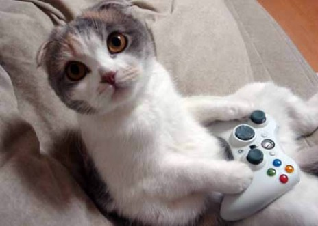 Gamer Kitteh